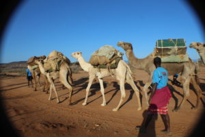 The camel mobile outreach is an initiative funded by the USAID through Afya Timiza project. The project implemented by Amref Health Africa in Kenya seeks to deliver health services in hard to reach areas of Samburu and Turkana counties. PHOTO: IMPACTHUB MEDIA
