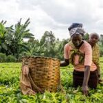 Kenyan women, youth in agriculture to access up to $100,000 in investment