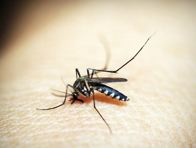 Cerebral malaria: A cause for concern for children, pregnant women