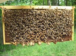 A social venture transforming arid land through modern honey farming. PHOTO: Graduate Farmer