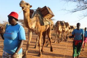 Elizabeth Ngeiwa, community mobilizer-2nd year in camel outreach. PHOTO: IMPACTHUB MEDIA