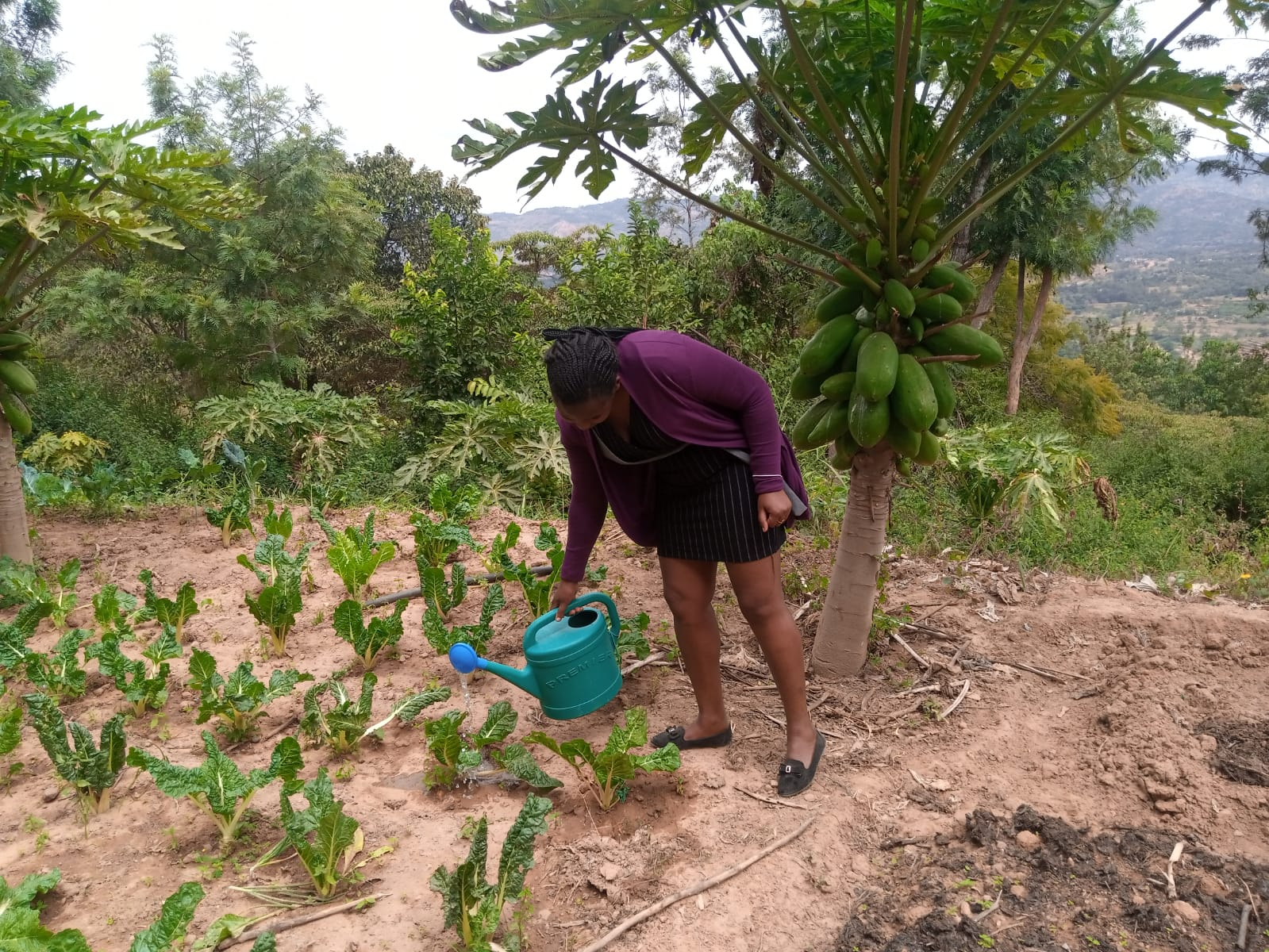 Patricia watering her spinach in her garden. PHOTO: Harriet Owalla