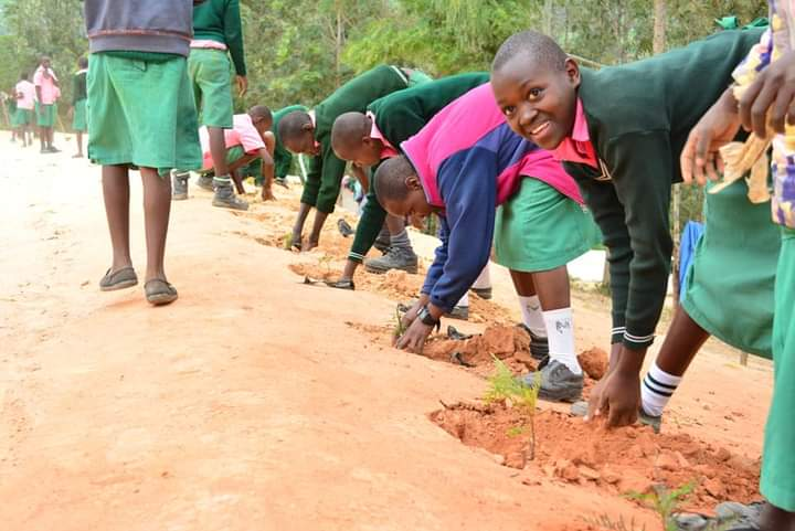 Students planting trees in their school. PHOTO: Harriet Owalla