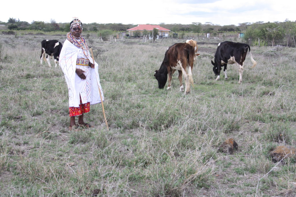 Peninnah looking after her cows in the field